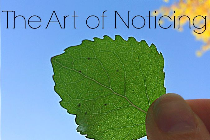 art of noticing